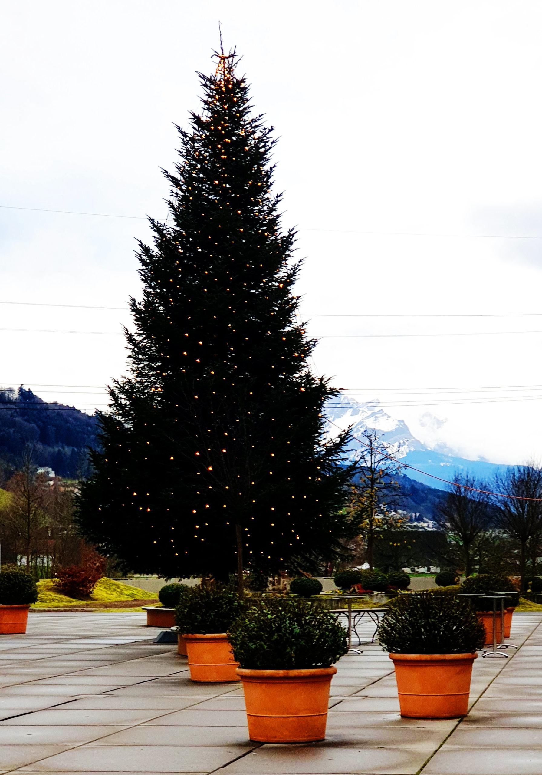 Weihnachtsbaum in den Alpen